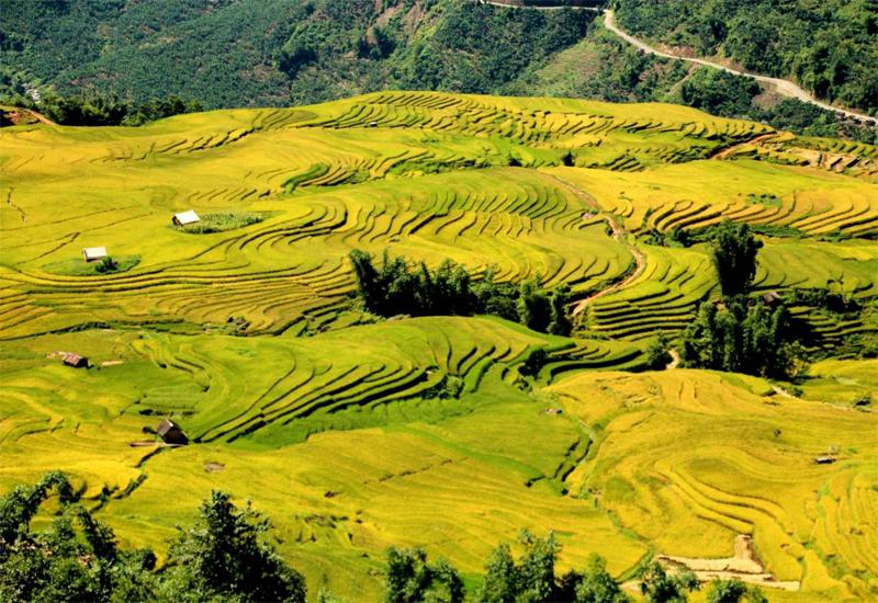 du lịch ruộng bậc thang Yên Bái