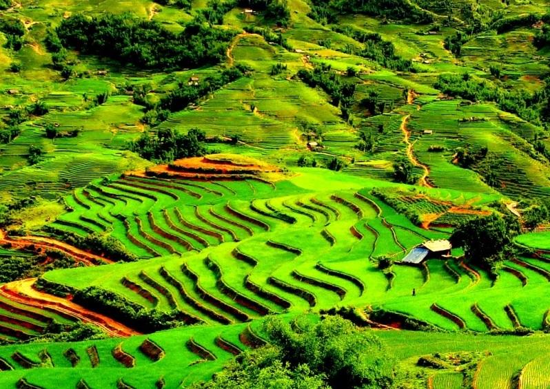 Vẻ đẹp thửa ruộng bậc thang Sapa xanh miên man - màu của lúa non