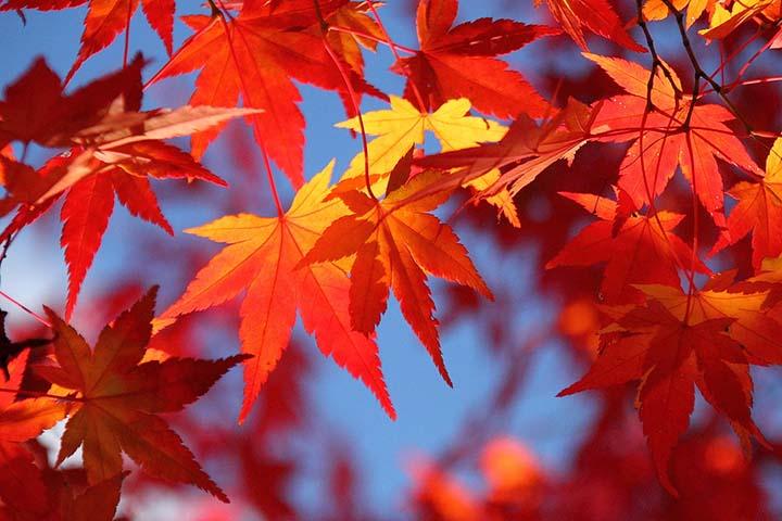 Du lịch Nhật bản mùa thu tuyệt vời nhất