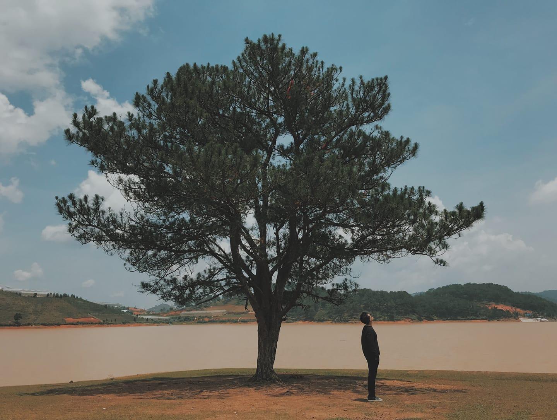 Tour Đà Lạt - Thông ơi đã hết cô đơn hay chăng