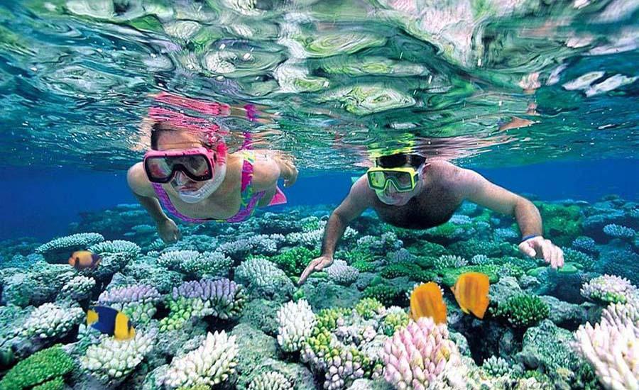 Vẻ đẹp rạn san hô trên Vịnh Hạ Long trong hành trình du lịch Hạ Long lặn ngắm san hô