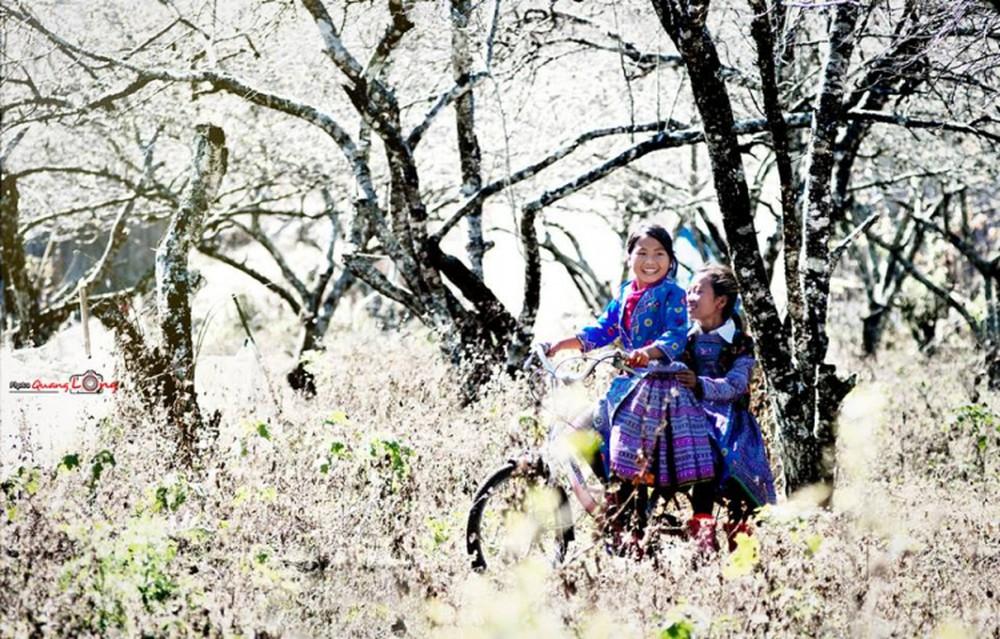 Đến Sapa, bạn lạc vào thế giới trắng muốt của hoa cỏ, của mùa xuân đang dần thức dậy.