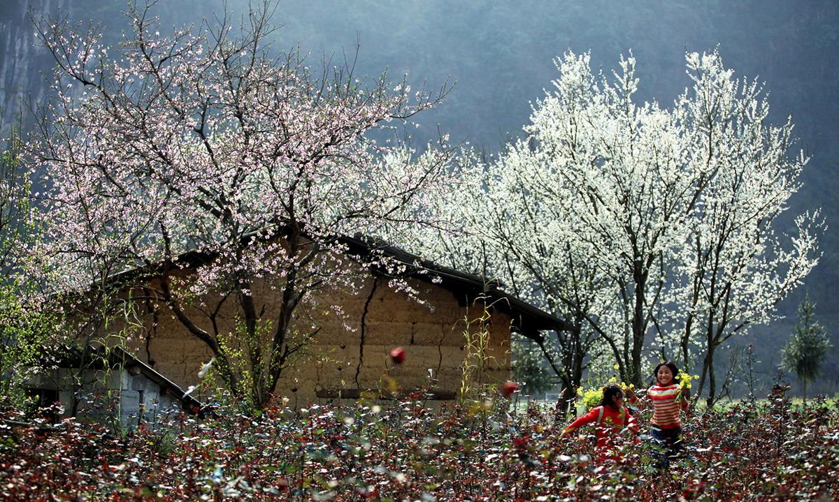 Tour Tây Bắc sẽ đưa bạn đến Mộc Châu ngắm hoa ban rạng rỡ khoe sư quyến rũ của mình.