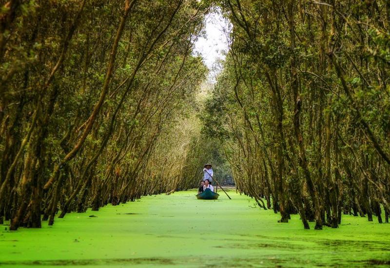 Khám phá rừng tràm Trà Sư ở An Giang