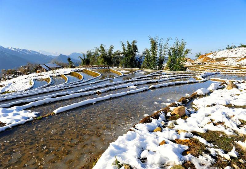 Vẻ đẹp trên ruộng bậc thang ở Sapa mỗi dịp tuyết rơi