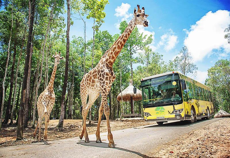 Đừng quên khám phá vườn thú hoang dã khi đến với du lịch Phú Quốc