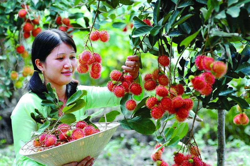 Thoải mái thăm quan và thưởng thức những quả trái thơm ngon chín mọng